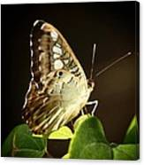 Butterfly In The Light Canvas Print