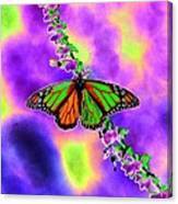 Butterfly - Monarch - Photopower 1551 Canvas Print
