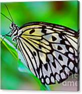 Butterfly On A Leaf Canvas Print