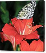 Butterfly On A Lily Canvas Print