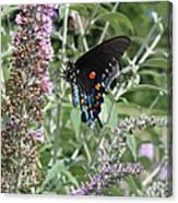 Butterfly On Bush Canvas Print
