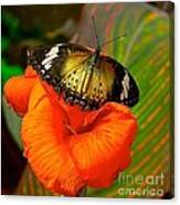 Butterfly On Canna Flower Canvas Print