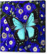Butterfly On Cineraria Canvas Print