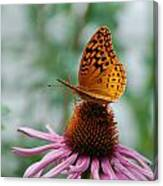 Butterfly On Cornflower Canvas Print