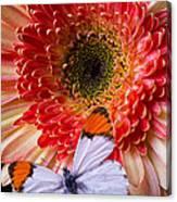 Butterfly On Daisy Canvas Print