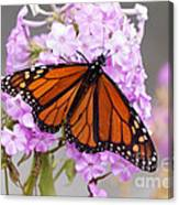 Butterfly On Pink Phlox Canvas Print