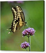 Butterfly On Purple Flower Canvas Print