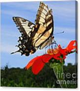 Butterfly On Red Daisy Canvas Print