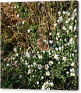 Butterfly On White Flowers Canvas Print