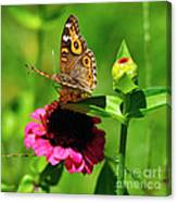 Butterfly On Zinnia Flower 2 Canvas Print