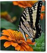Butterfly On Zinnia Canvas Print