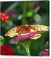 Fritillary Butterfly On Zinnia Canvas Print