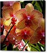 Butterfly Orchids Canvas Print