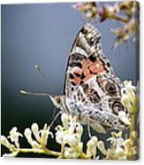 Butterfly - Painted Lady - Tasty Out Here Canvas Print