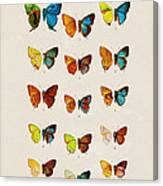 Butterfly Plate Canvas Print