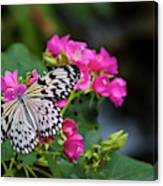 Butterfly Pollinating Flower Canvas Print