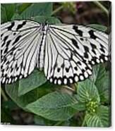 Asian Paper Kite Canvas Print