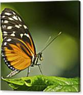 Butterfly Profile Canvas Print