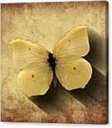 Butterfly 5 Canvas Print