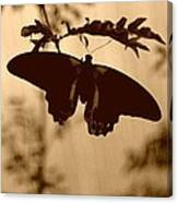 Butterfly Silhouette Canvas Print