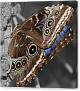 Butterfly Spot Color 1 Canvas Print