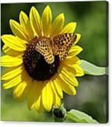 Butterfly Sunflower Canvas Print