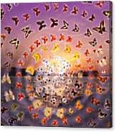 Butterfly Sunset Canvas Print