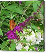 Butterfly Surprise Canvas Print