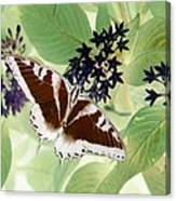 Butterfly - Swallowtail - Photopower 140 Canvas Print