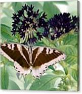 Butterfly - Swallowtail - Photopower 141 Canvas Print