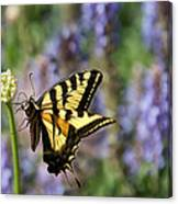 Butterfly Thoughts Canvas Print