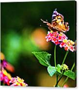 Butterfly Three Canvas Print