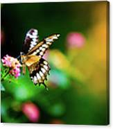 Butterfly Two Canvas Print