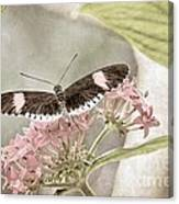 Butterfly Whisper Canvas Print