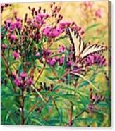 Butterfly Wildflower Canvas Print