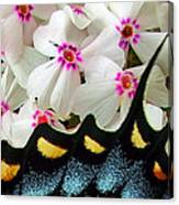 Butterfly Wing And Phlox Canvas Print