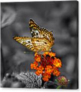 Butterfly Wings Of Sun Light Selective Coloring Black And White Digital Art Canvas Print