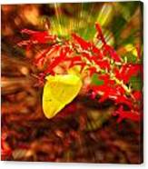 Butterfly With Flare Canvas Print