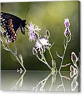 Butterfly With Reflection Canvas Print