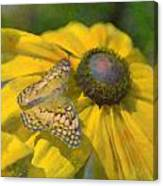 Butterfly7 Canvas Print