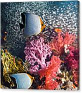 Butterflyfish Over Coral Reef Canvas Print