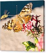 Butterfly's Friend Canvas Print