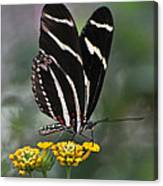 Butterly Canvas Print