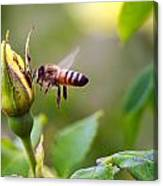 Buzz The Bee Canvas Print