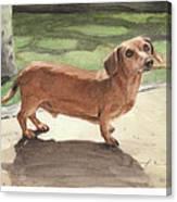 Buzz The Dachshund Watercolor Portrait Canvas Print