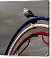 Bw Gull On Rwb Canvas Print