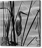 Bw Reflections Canvas Print