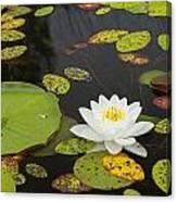 Bwca Water Lily Canvas Print