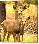 By Mama's Side - Photo Manipulation - Mule Deer - Casper Mountain - Casper Wyoming Canvas Print