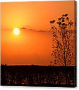 By The Everglades Canvas Print